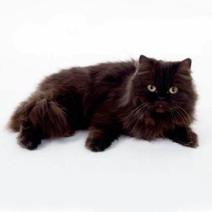 Bosch корм для котенка