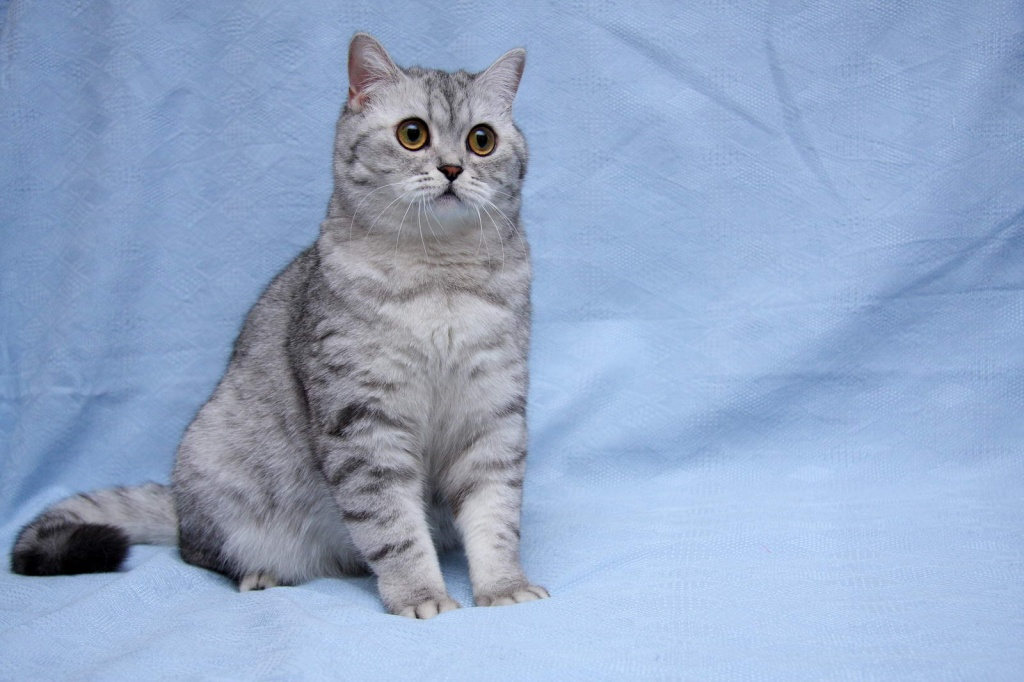 кошка для детей картинка