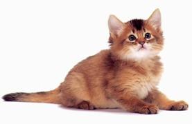 cat2(1).jpg
