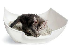 как воспитать котенка спокойным