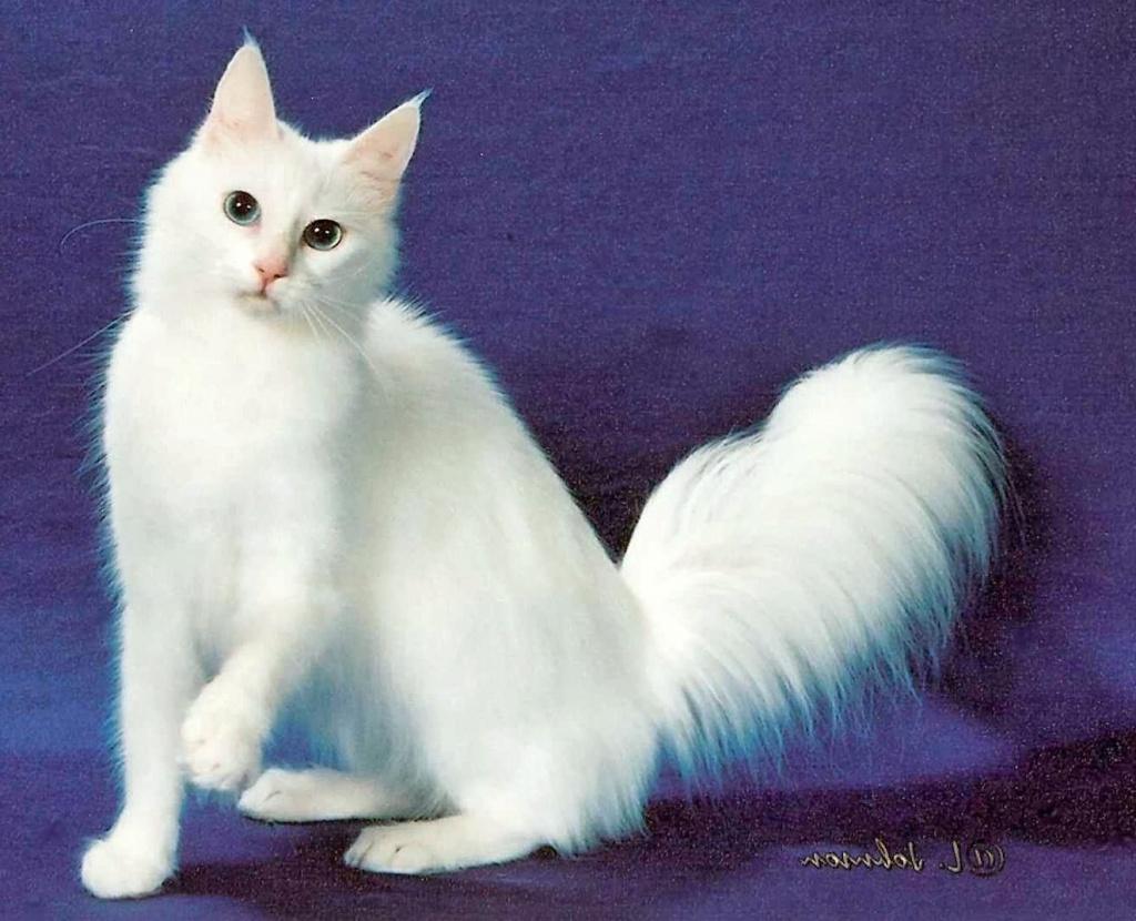 породистых кошек с названиями
