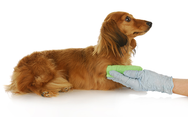 Картинки по запросу Как правильно ухаживать за собакой?
