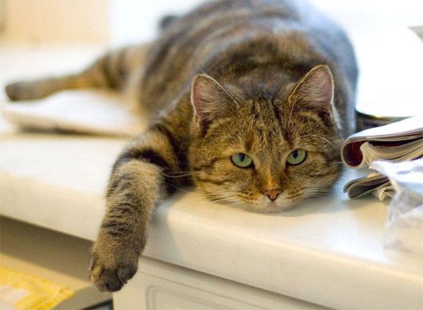 Кошки на дому для пожилых петербург дом престарелых